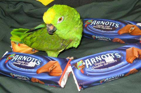 PollyEster the Amazon parrot and her collection of TimTams